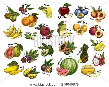 Set of isolated fruit sketches. Papaya and banana, guava and mango, durio and common fig, feijoa and orange, avocado and passion fruit, apple and pear, melon and apricot, plum. Food theme