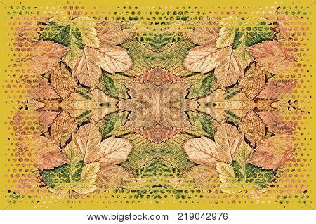 Autumn leaf kaleidoscope pattern as abstract nature background.Digitally altered image.