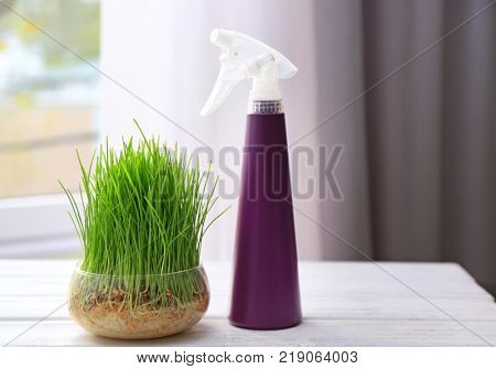Spray bottle and glass bowl with wheat grass on table indoors
