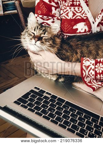 Woman Hugging And Petting Cute Cat And Holding Laptop In Room In The Morning. Sweet Home Moments. Ch