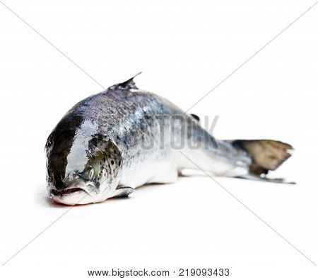 whole salmon fish isolated on white background