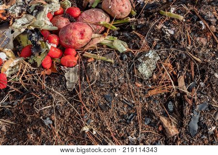 A variety of decomposing organic matter food scraps mixed with dirt leaves and pine needles horizontal aspect