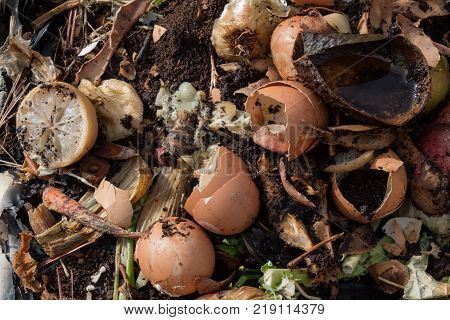 Compost heap with rotting fruit vegetable and eggshell scraps horizontal aspect