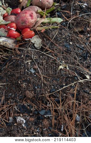Decomposing kitchen waste on organic matter and soil copy space vertical aspect