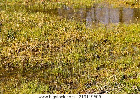Grassy Marshland With Standing Water