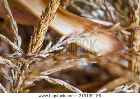 A closeup of dried out corn husk