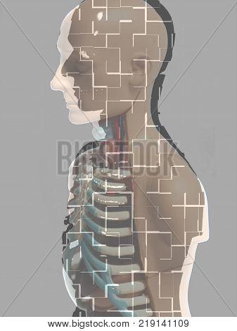 Human Body Anatomy Model illustration on a gray background.
