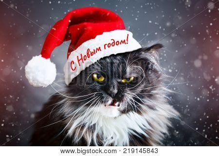 Happy new year. New Year's cat in a Christmas hat. New Year's background.