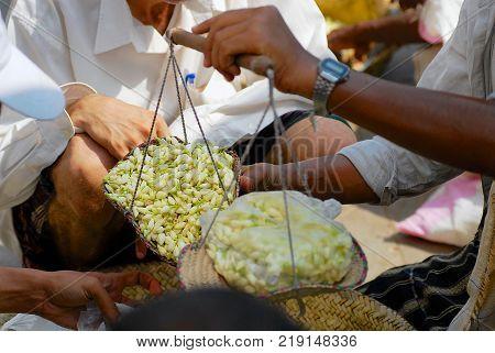 SANAA, YEMEN - SEPTEMBER 17, 2006: Unidentified men weight jasmine flowers at the market in Sanaa, Yemen. Fresh jasmine aroma is considered awaking men's and women's sexuality in Yemen.