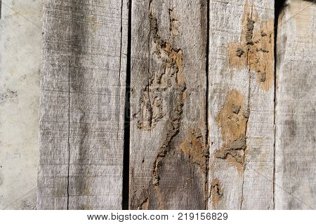 Old wood floor with wood termites.timber beam of door damaged by termite which eat for a long time