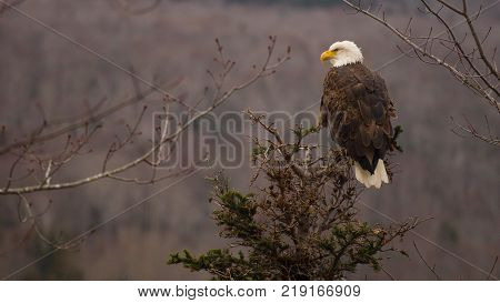 Birds of prey, including hawks, falcons, owls and eagles, such as the bald eagle above, are also known as raptors because they use their claws instead of their beaks to capture prey. They are meat-eaters with keen eyesight, easily able to spot small prey