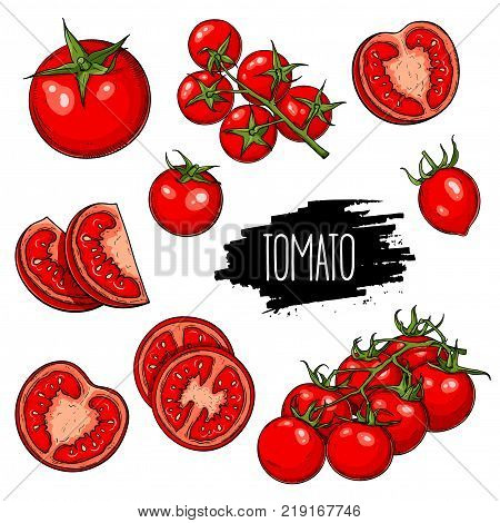 Hand drawn vegetable set of tomatoes slices halves and cherry tomatoes isolated on white background. Vector sketch illustration.