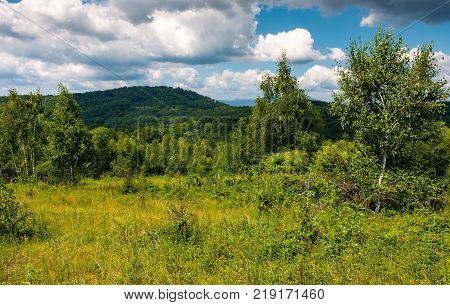 grassy meadow in forest on a cloudy day. lovely wild nature summer scenery in mountains. location Uzhanian National Nature Park Ukraine
