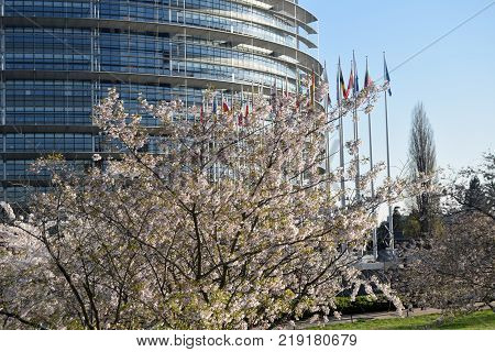 Peach trees bloomed around the European Parliament in Strasbourg - France