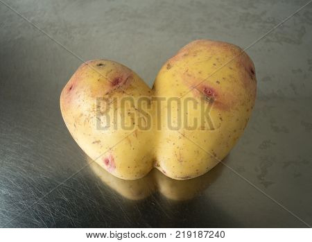 Conjoined Siamese potato on a stainless steel kitchen sink with copy space. Potential use as wonky / funny / ugly vegetable or food waste concept.