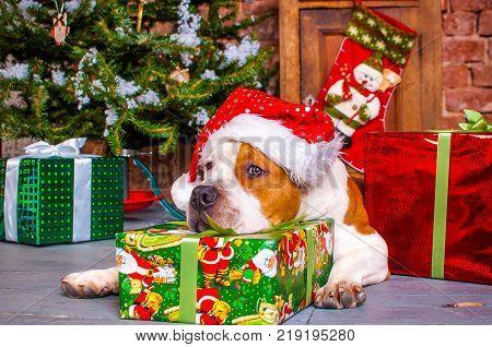 Happy Christmas dog with a Christmas tree