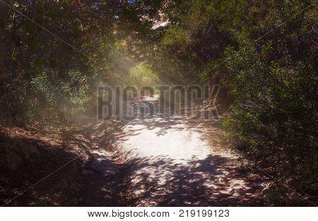 Sunlit path to the gorge Avakas on the Akamas peninsula. Cyprus.