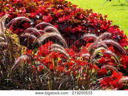 Red Flower sity design in park, Stockholm