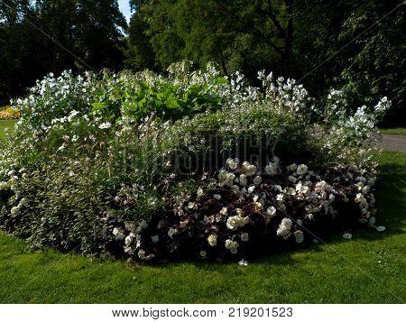 White Flower sity design in park, Stockholm