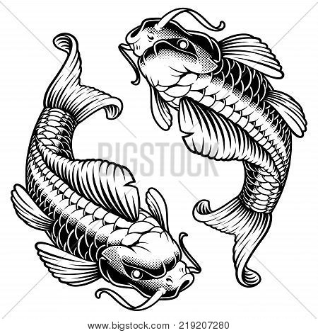 Koi carp vector illustration isolated on white background.