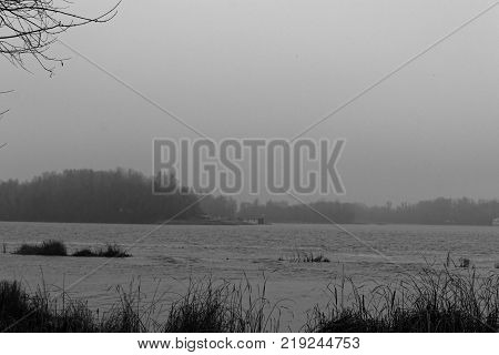 Reeds in the rive Swaying Reed background monochrome image