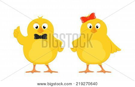 Two funny yellow chickens with bow isolated on white background, illustration.