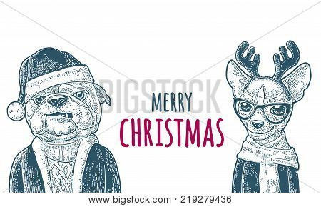 Dog Santa claus in hat, coat, sweater and deer with glasses, scarf, horns, coat. Merry Christmas handwriting lettering. lettering. Vintage color engraving illustration. Isolated on white background