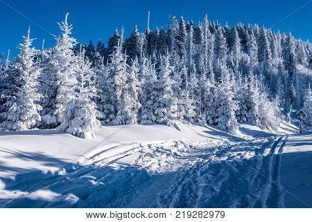 Lysa hora hill with snow frozen trees and clear sky in Moravskoslezske Beskydy mountains in Czech republic during freezing winter day