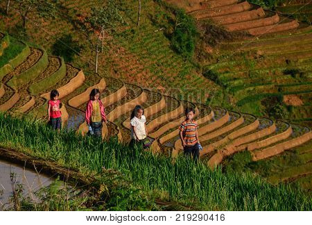 Sapa Vietnam - May 28 2016. Children playing on rice field in Sapa Vietnam. Sapa is a frontier township and capital of Sa Pa District in Lao Cai Province in north-west Vietnam.