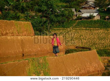 Sapa Vietnam - May 28 2016. A girl walking on rice field in Sapa Vietnam. Sapa is a frontier township and capital of Sa Pa District in Lao Cai Province in north-west Vietnam.