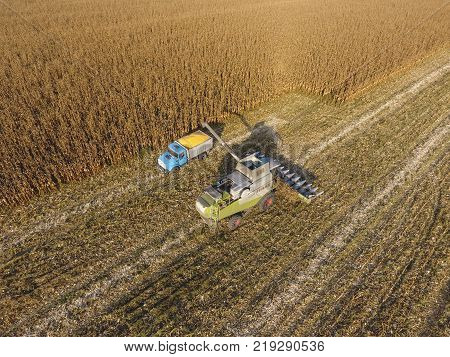 Fields Next To Krasnodar, Russia - September 15, 2017: Combine Harvester Pours Corn Grain Into The T