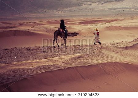 Camels On The Sand Dunes In The Sahara Desert. Morocco, Africa.