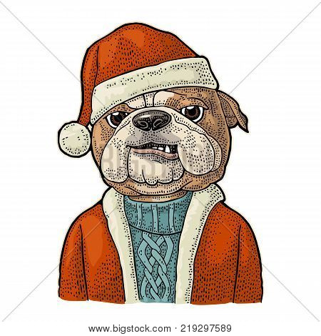 Dog Santa claus in hat, coat, sweater. Vintage color engraving illustration for poster. Isolated on white background
