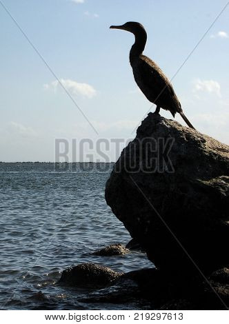 Cormorant bird stands as a sentinel in silhouette on a rock at the entrance of a channel on the east coast of Florida