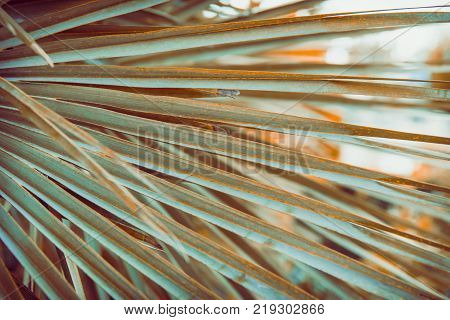 Large Round Spiky Palm Tree Leaf in Golden Sun Flare. Dark Green Color. Trendy Hipster Style Film Toned Effect. Tropical Vacation Traveling Asia Caribbean Copy Space