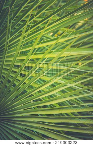 Large Round Spiky Palm Tree Leaf in Golden Sun Flare. Dark Green Color. Trendy Hipster Style Matte Toned Effect. Tropical Vacation Traveling Asia Caribbean Copy Space