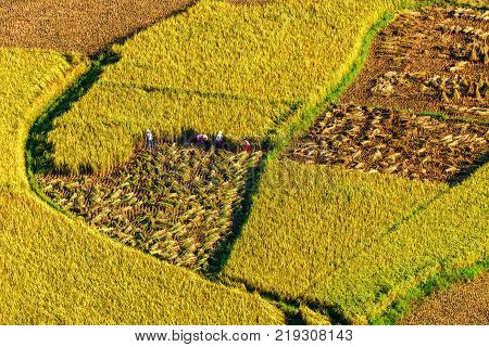 Rice And Rice Field In Trung Khanh, Cao Bang, Vietnam. Landscape Of Area Trung Khanh, Cao Bang, Viet