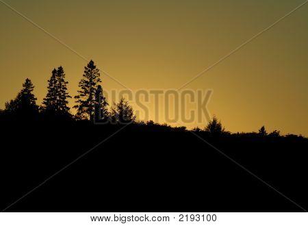 Golden Algonquin Treeline