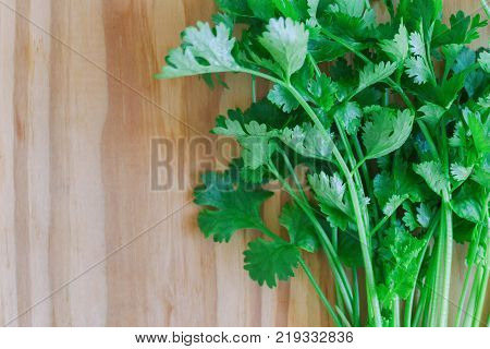 Green leaves coriander or cilantro lay on wood table. Coriander or cilantro in top view flat lay with copy space. Food preparation concept for fresh vegetable. Cooking with fresh coriander.