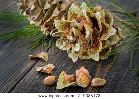 Gummy resinous husked fir-cones with conifer needle branch and cedar nuts on dark wooden background closeup
