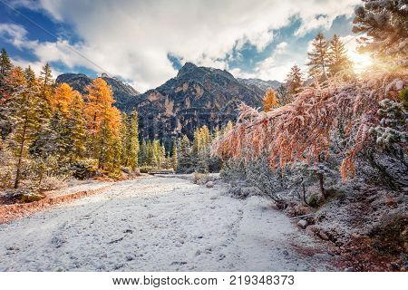 First snow in Naturpark Fanes-Sennes-Prags. Colorful autumn landscape in Dolomite Alps Braies Lake location Italy Europe. Artistic style post processed photo.
