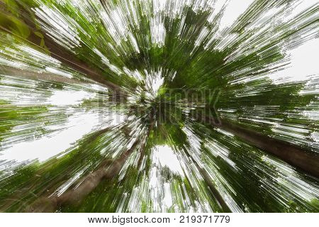 The forest with abstract zoom bright backgroundlens zoom effect the green forest