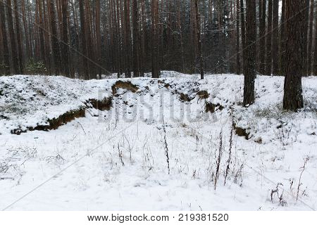 Trees covered with white fluffy snow in the winter forest