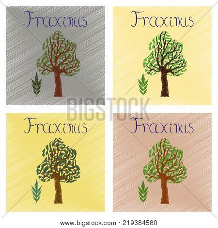 assembly flat shading style Illustrations of plant Fraxinus