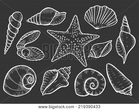 Hand drawn Seashell, sea shell, starfish nature ocean aquatic underwater vector seashell set. seashell sea shell marine engraving illustration on black background