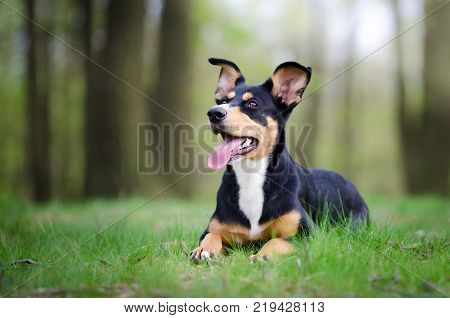 Beautiful dog portrait in the middle of the forrest in spring ti