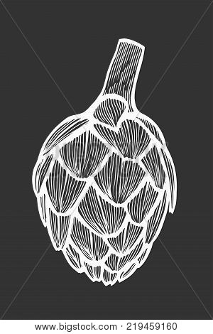 Hand drawn Artichoke Vector illustration. Fresh organic vegetable, herb in engraved style. Detailed food drawing. Great for label, poster, print. isolated on white background. Isolated on black