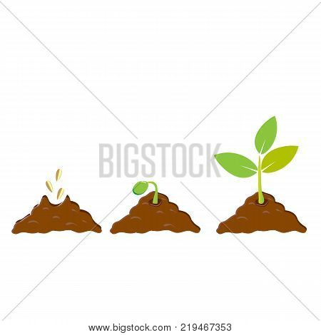 Growing seed sprout in ground. Infographic sequence on white background. Vector illustration