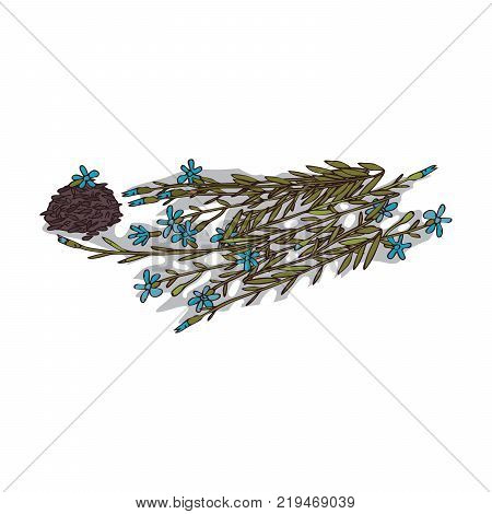 Isolated clipart of flax plant on white background. Botanical drawing of herb Flax with flowers and leaves, seeds