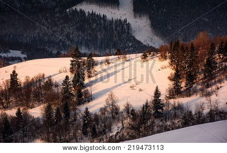 forested snowy hillside in morning light. lovely winter nature background